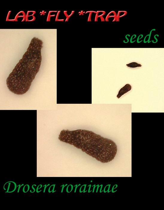 Seeds The Seeds